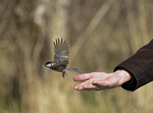 A Bird in the Hand © Marcia Rutland