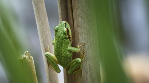 Green and Cute © Erika Nadon