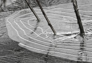 Nature's Lines and Shapes © Pat Haugen