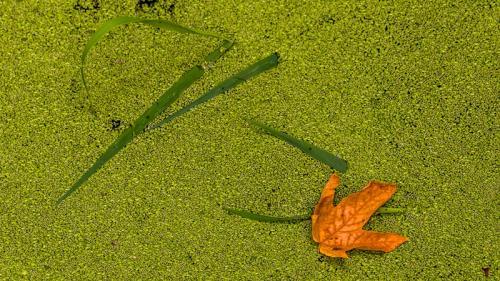 Algae Bloom © Terry Jones