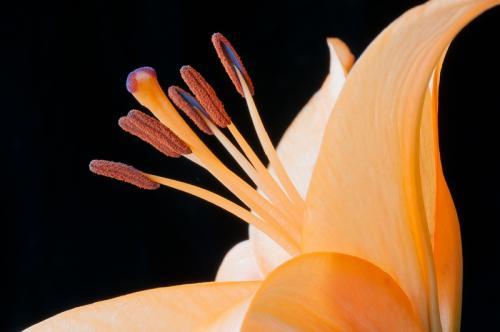 Lily © Rich Loewen