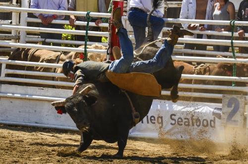 Bull Ride © Charlie Schaal