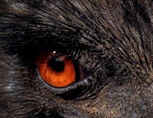 Evil Eye © Bob Belhouse