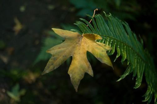 SOOC 2 – Catch You When You Fall © Len Gatey