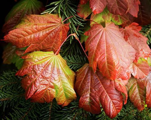 Leaves © Glennys LaRose