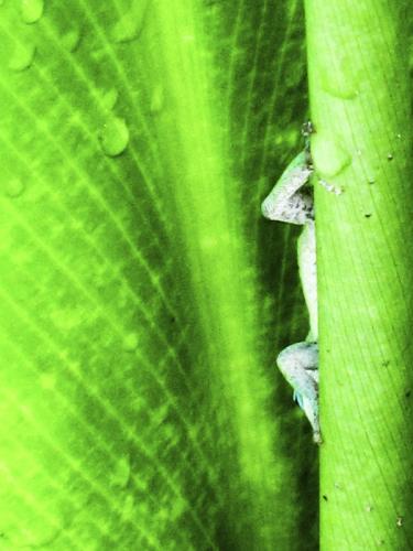 Gecko © Brian Clemens
