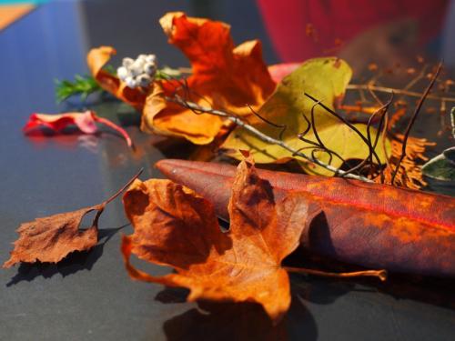 Old Dead Leaves © Barry Elias