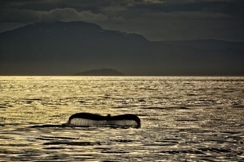 Sunset Dive © Bruce Whittington