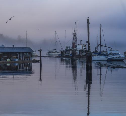 Misty Harbour © Sue Williams
