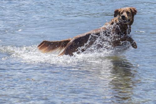 Canine Joy © Sue Williams