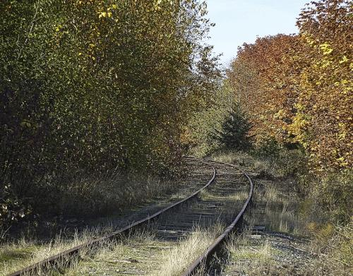 Autumn Tracks © Erika Nadon