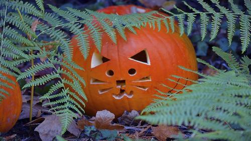 Purrfect Pumpkin © Lindsey Woods