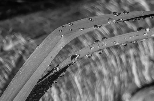 SOOC 2 – Morning Dew © Pat Haugen