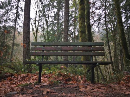 Bench in the Forest © Ron McBride