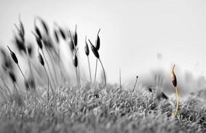 OUTCAST © Bob Belhouse