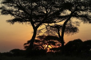 African Sunset © Brian Clemens