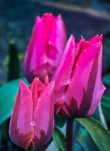 Morning Dew © Betty Todd