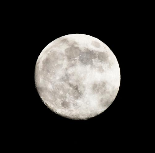 Moon in My Back Yard © Bruce Whittington