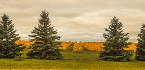 Fall Colours © Betty Todd