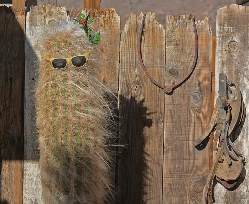 Cactus Incognito © Lindsey Woods