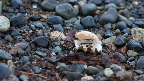 Beach Shell © Amanda Rohne