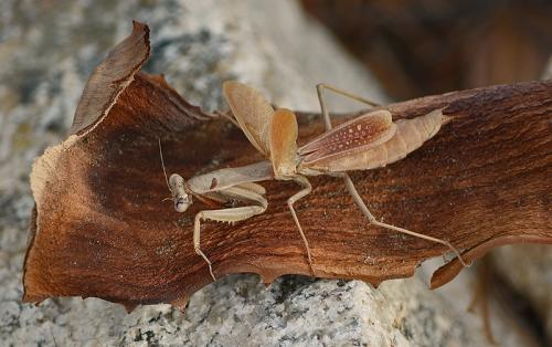 Bark Bug © Lindsey Woods