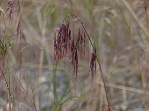 SOOC 1 – Red Grass © Pat Haugen