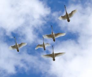 Angelic Flight © Zan Stenhouse