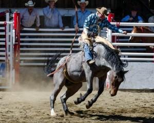 Ride'm Cowboy © Charlie Schaal