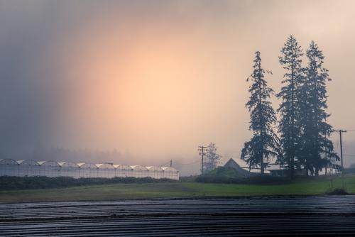 SOOC 2 – Green Houses © Pat Haugen