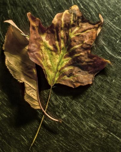 Dry Leaves Still Life © Bill Brown