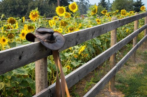 Sun Flower Fence © Charlie Schaal