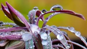 Water Drops © Charlie Schaal