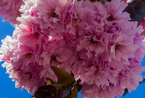 Blossom Time © Betty Todd