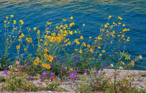 Desert Flowers © Betty Todd